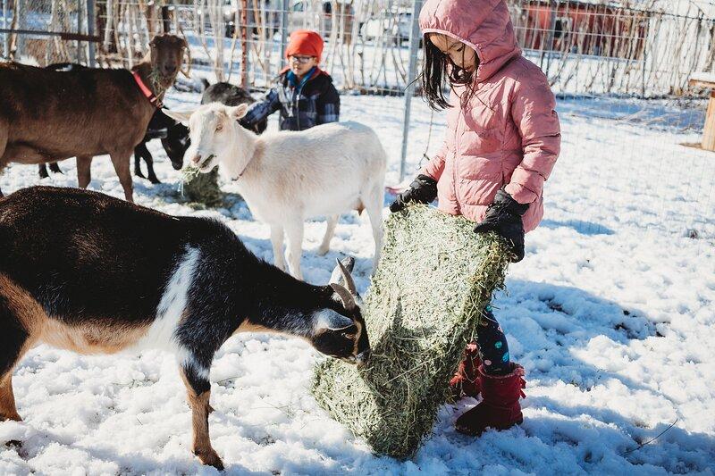Stay at a farm! Near Big Bear and Joshua Tree, location de vacances à Lucerne Valley