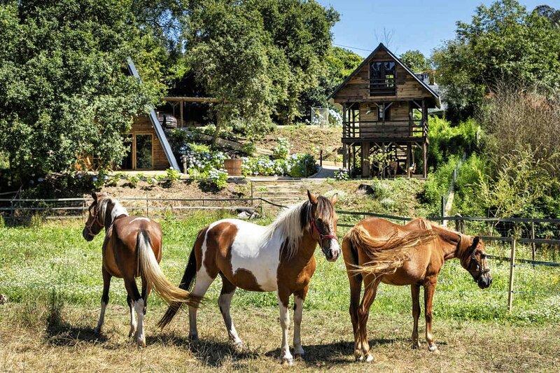 The Tree House at vale da Silva Villas rural farm, aluguéis de temporada em Macieira de Alcoba