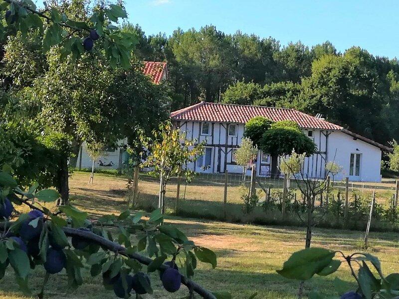 Ferme Landaise, location de vacances à Rion-des-Landes