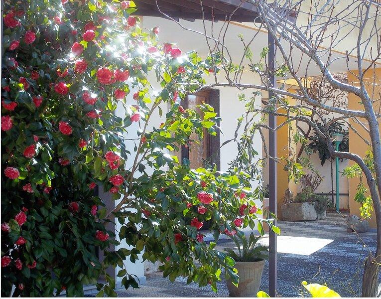 Casa vacanze Camelia, casa vacanza a Castiglione d'Otranto