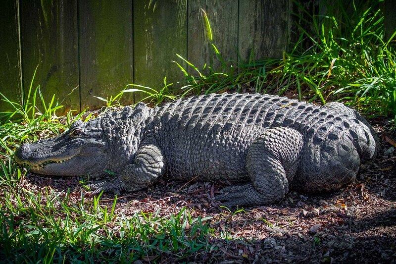 Alligator Adventure North Myrtle Beach