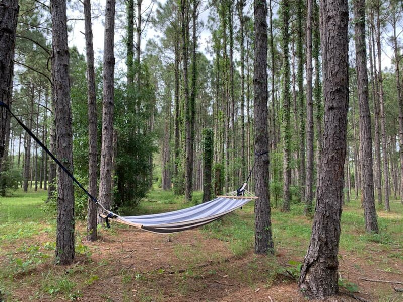 Monarch Country Retreat, holiday rental in Williston