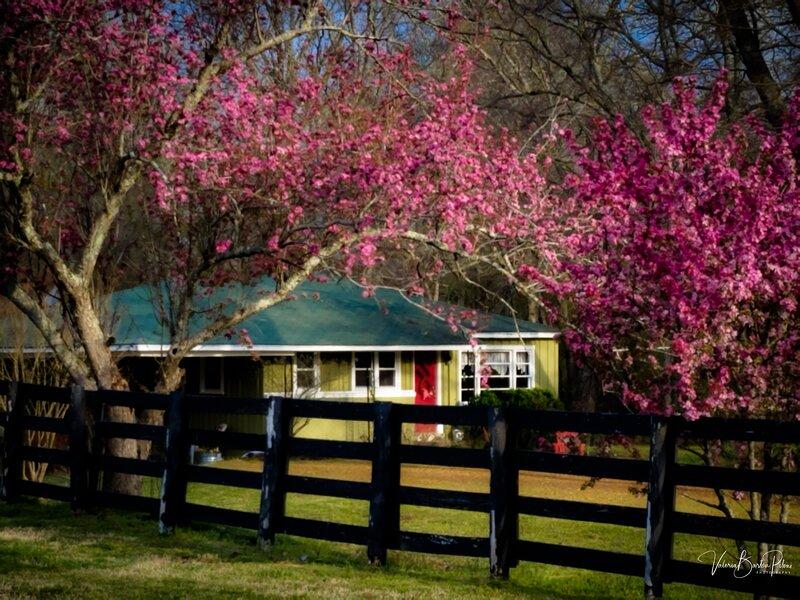 The Cottage at Stillwaters Farm--A FarmStay B&B, holiday rental in Lexington