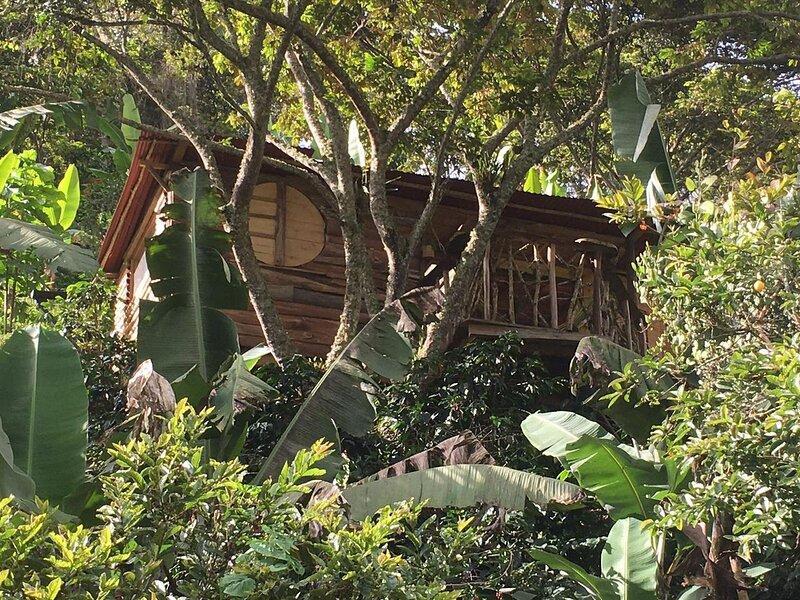 Cabana del Rio Lejos Pijao, Finca Flora del Rio, holiday rental in Pijao