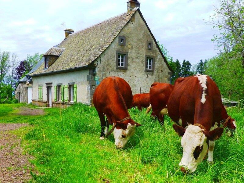Le gîte de la Chaleille, Ferienwohnung in Saint-Sauves-d'Auvergne