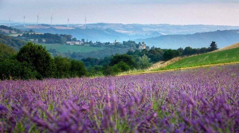 Cosy Cottage on lavender farm near Albi, France, casa vacanza a Alban