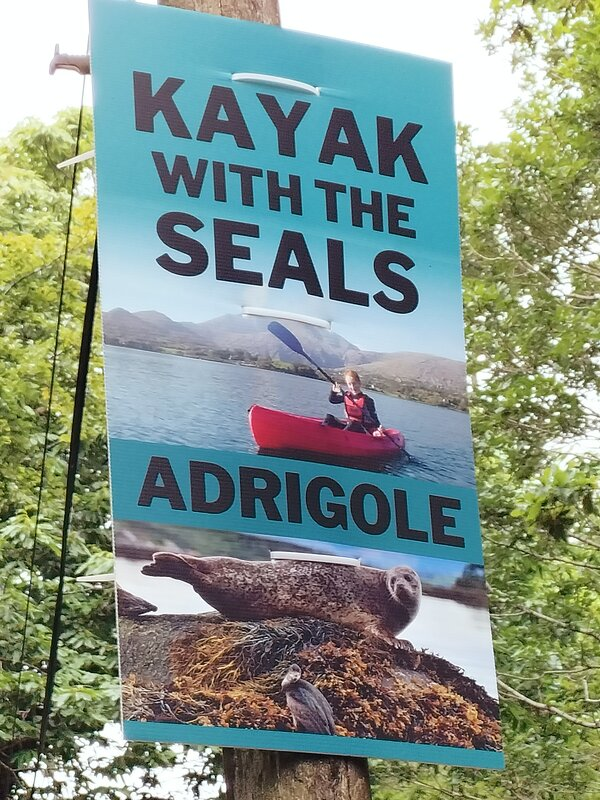 Kayak with the seals.