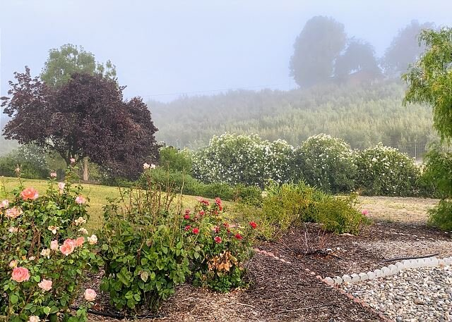 Views of Olive Orchards and Vineyards for Miles, holiday rental in San Miguel