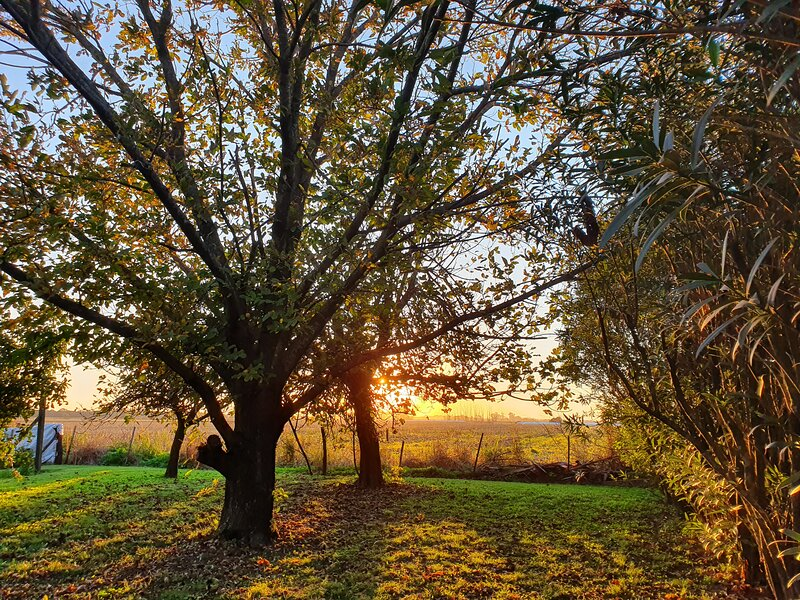 Autumn afternoon in the orchard