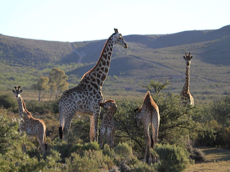 Melozhori Private Game Reserve, holiday rental in Overberg District