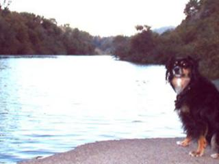Dock Calm, Dog Friendly Russian River Vacation Rental