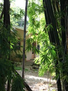 Casa Morfo through the bamboo