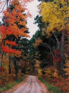 Spectacular Fall Colors