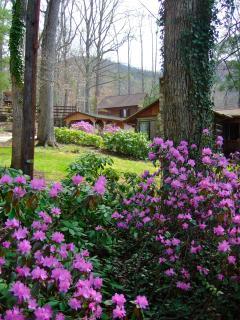 Blooming Landscape