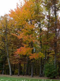 Lovely Fall Foliage