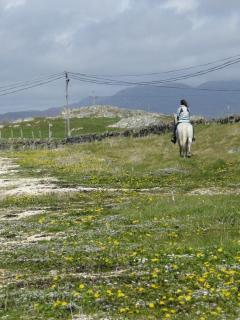 Beach Trek on Connemara Pony