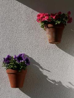 plants on one of he balconies