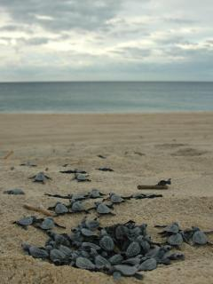 Turtle Nest in front of Villa