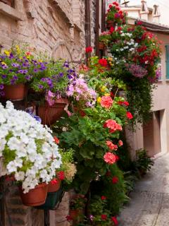 Spello Walkways (photo copyright Geoff Beatty)