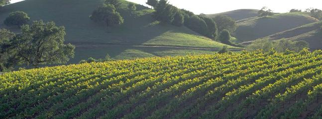 One of hundreds of vineyards in our area