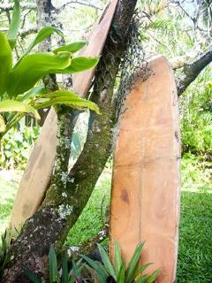 Old broken surfboards, veterans of many 'board meetings'.