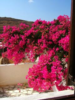 View from kitchen over another marble patio dripping in bougainvillea