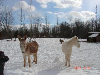 winter is beautiful too, you can arrange time with the equines