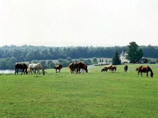Shenandoah Cabin Resort with Horse Farm and Marina