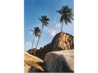 Palms at the Baths - Virgin Gorda