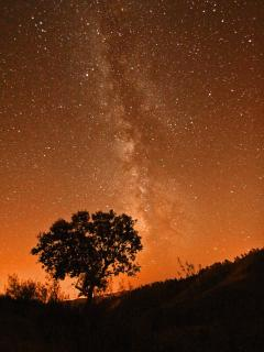 spectacular night skies