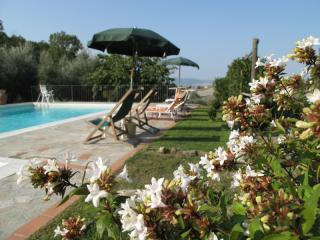 The pool and the flowers