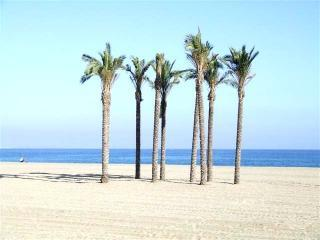 Roquetas de Mar beach palms