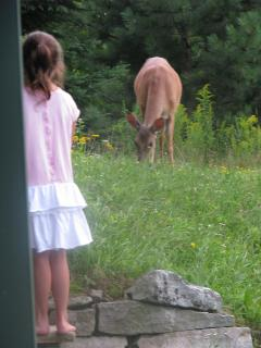 The deer come pretty close to people around here