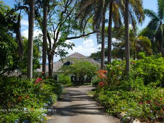 Lime Tree - 5 Bedrooms, Ocho Rios