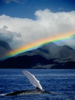 Maui.....whales and rainbows!