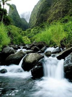 hiking the stream to the Iao Needle