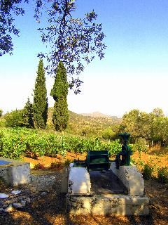 from our well, showing vineyard
