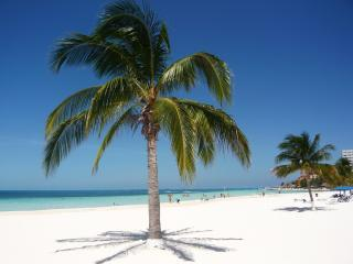 ...powder white Sand and Palmtrees