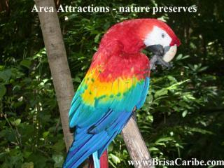 Area Attracttions Riviera Maya - nature preserve