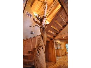 Vieille de 800 ans Juniper Tree spirale escalier cas