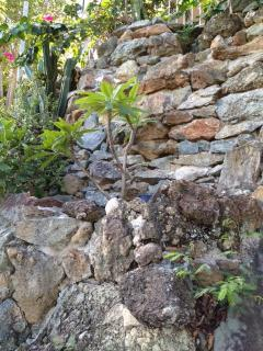 Rock wall in Garden