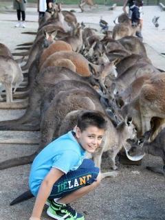 See kangaroos,crocs, koalas, bird shows, snakes, Aboriginal dances. All day entertainment
