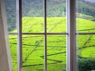 Enjoy the beautiful view of the tea estate and the mountains from the living room