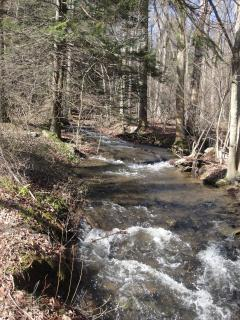 Creek with brook trout and your listening enjoyment.