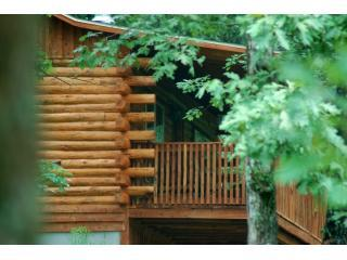 Wooded and secluded tree top views