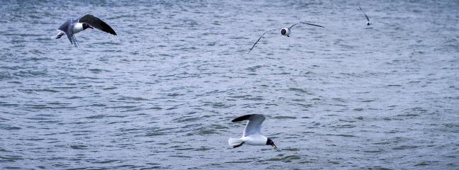 Waterfront bird-watching