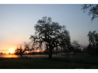 Come enjoy the Oaks of Olivet, Santa Rosa