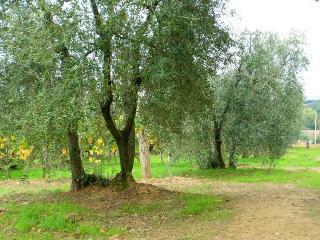 Casina di Rosa - cosy home in a village in Tuscany
