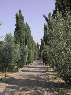 Cobblestone Driveway lined with cypresses and olive trees