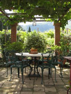 A favorite gathering place to gather, under the grape pergola